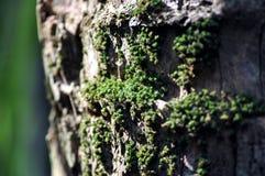 Moosiger Baum Stockbilder
