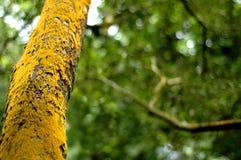 Moosiger Baum Stockfoto