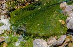 Moosiger bedeckter Felsen in einem Strom lizenzfreie stockbilder