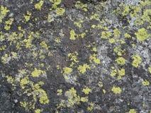 Moosiger Felsen Stockbilder