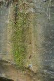 Moosiger Felsen mit Wasser und einem Blatt Stockfoto