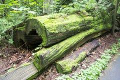 Moosiger gestürzter alter Baum Lizenzfreie Stockfotografie
