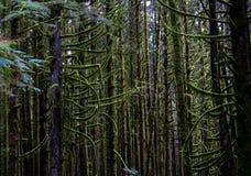 Moosiger grüner Wald Stockfoto