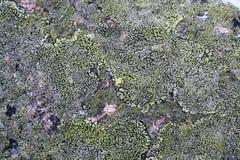 Moosiger Granit der Beschaffenheit Stockfoto