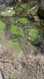 Moosiger Nebenfluss Stockbilder
