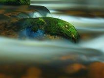 Moosiger Stein mit Gras im Gebirgsstrom Neue Farben des Grases, tiefgrüne Farbe des nassen Mooses und blaues milchiges Wasser Lizenzfreie Stockfotos
