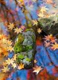 Moosiger Stein und fallende Blätter im Herbst Stockbilder
