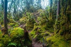Moosiger Wald in Cameron Highlands stockfotografie