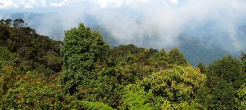 Moosiger Wald, Gunung Brinchang Stockfotos