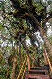 Moosiger Wald von Gunung Brinchang, Cameron Highlands Stockbild