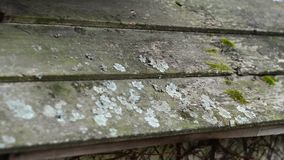 Moosiges Garten-Dach stock footage