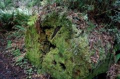 Moosiges gefallenes Rotholz Stockbilder