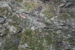Mooss на расшиве стоковое фото rf