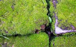 Mooswachstum auf dem Stein, Punkt des selektiven Fokus Lizenzfreie Stockfotografie
