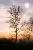 Moot and tree Royalty Free Stock Photos