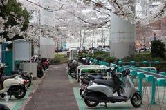 mopeden parkerar royaltyfri bild