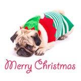 Mops för glad jul Arkivbilder