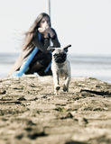 Mops pug running Royalty Free Stock Images