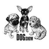 Mops, spaniel och Terrier Ett tecken med en bild av hundkapplöpning den gulliga djupf?ltfokusen l5At vara valpar en blir grund tr royaltyfri illustrationer