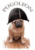 Mopsa pies w wizerunku Napoleon Obraz Stock