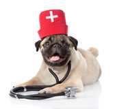 Mopsa szczeniaka pies jest ubranym pielęgniarki medyczny kapelusz i stetoskop Odizolowywający na bielu obraz stock