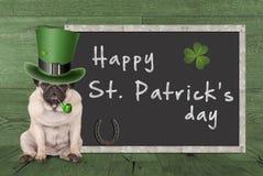 Mopsa szczeniaka pies z leprechaun kapeluszem dla st Patrick ` s dnia dymienia drymby, siedzi następnego pustego chalkboard znaka Zdjęcia Stock