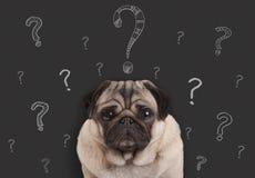 mopsa szczeniaka psa obsiadanie przed blackboard znakiem z ręka rysującymi kredowymi znakami zapytania Zdjęcia Stock