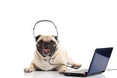 Mopshund med headphonen som isoleras på vit bakgrundscallcenter Royaltyfria Bilder