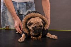 Mopshund och pojke Royaltyfri Foto