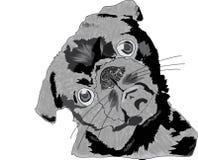 Mopshundtvivel och vitbakgrund Arkivfoto