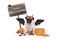 Mopshunduppklädd som jäkel för halloween, med den roliga pumpalyktan och träbrädet Royaltyfri Bild