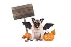 Mopshunduppklädd som slagträet för halloween, med den läskiga pumpalyktan och det tomma trätecknet Arkivfoto