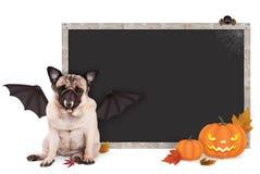 Mopshunduppklädd som slagträet för halloween, med det tomma svart tavlatecknet och pumpor Royaltyfria Bilder