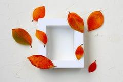 Moquerie d'automne avec le cadre blanc, feuilles colorées Image libre de droits