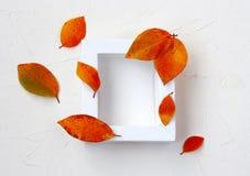 Moquerie d'automne avec le cadre blanc, feuilles multicolores Photos stock