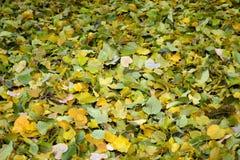 Moquette dei fogli di autunno verdi e gialli immagine stock libera da diritti
