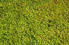 Moquette dell'erba Fotografie Stock Libere da Diritti