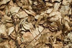 moquette di autunno immagine stock