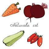 Morötter, beta, tomater och zucchinin räcker utdraget Arkivbild