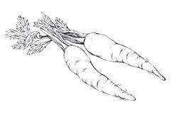 Morötter Hand dragen svartvit illustration Royaltyfria Foton