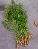 Morötter i vår trädgård i Kina Arkivfoton