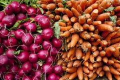Morötter och rädisor Royaltyfri Fotografi