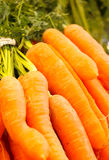 morötter växt utgångspunkt Royaltyfria Bilder