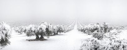 Mora. Panoramic photo with snow olives in Mora, Toledo from Spain Stock Images