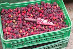 Mora Raspberries fresco Fotografia Stock