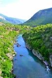 Moraca河,黑山 免版税库存照片