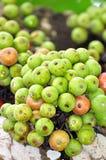 Moraceae. Fig ripe. Stock Images