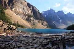 Moraine Lake - Alberta - Canada. Dead wood in Moraine Lake - Alberta - Canada Royalty Free Stock Image