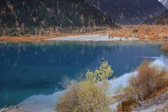 Moraine Lake of Canada. Moraine Lake with plants and trees in Canada. Alberta, Banff Royalty Free Stock Photography