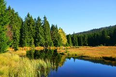 Moraine lake Kleiner Arbersee in National park Bavarian forest. Stock Images